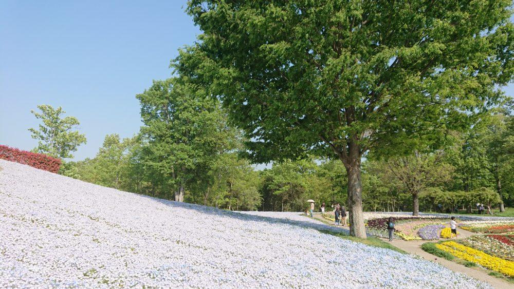 讃岐まんのう公園のネモフィラの丘