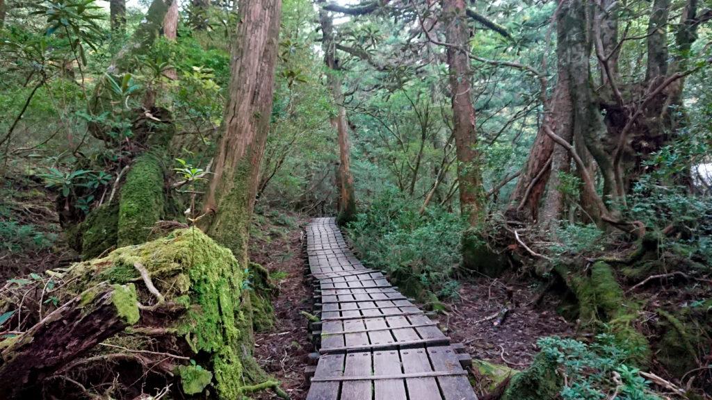 綺麗に整備された登山道