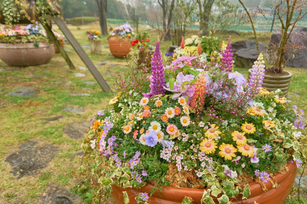 兵庫県立フラワーセンターの鉢に植えてある多種の花