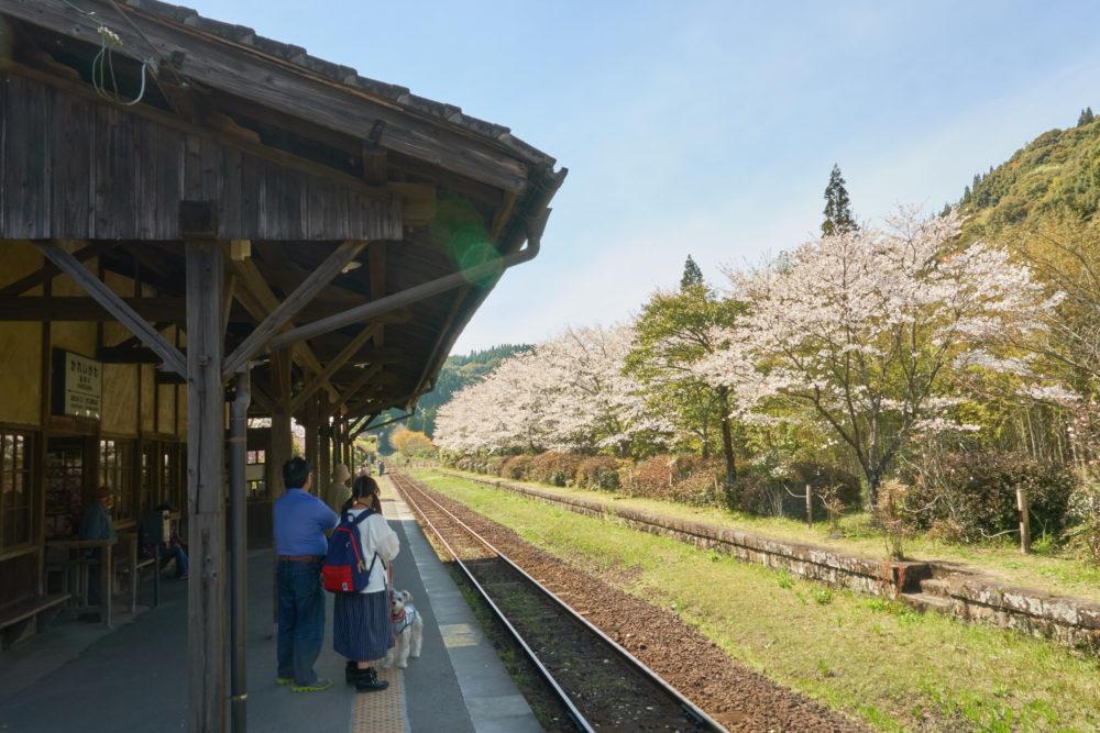鹿児島県にある嘉例川駅の駅舎と線路沿いの桜