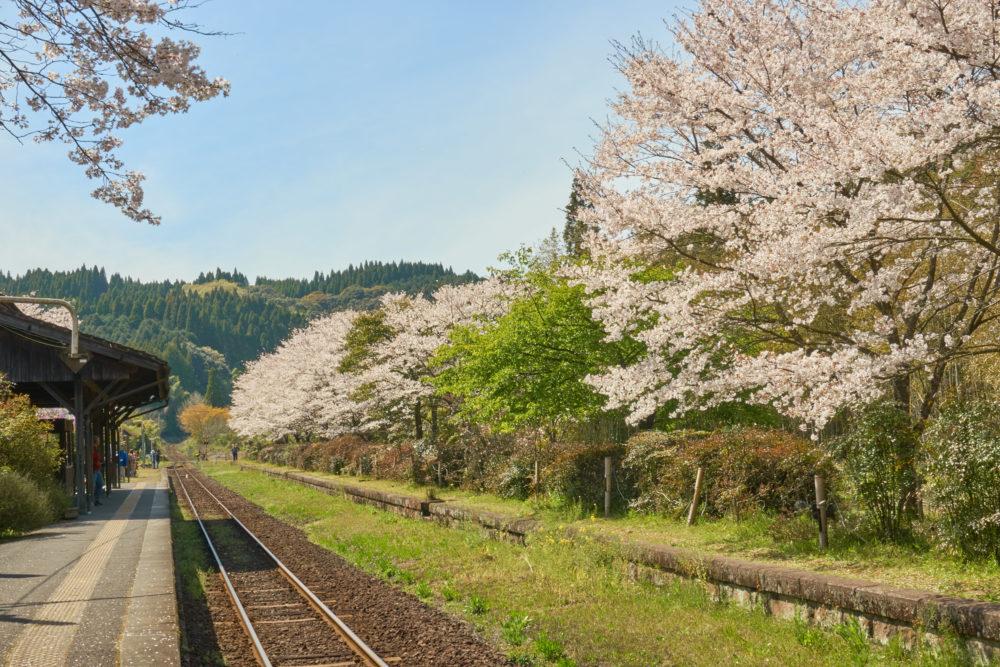 鹿児島県にある嘉例川駅の線路沿いに咲く桜