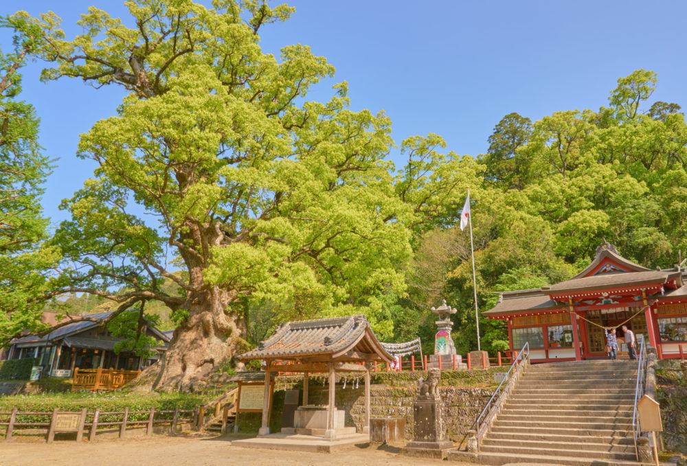 鹿児島県の姶良市にある大楠と蒲生八幡神社
