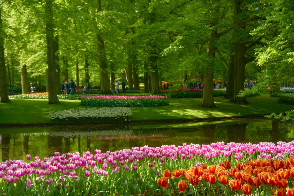 オランダにあるキューケンホフ公園の森林の中の花々