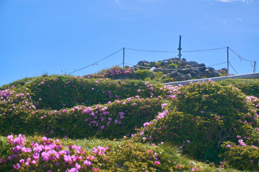 鹿児島県の高千穂峰にある天逆鉾とミヤマキリシマ
