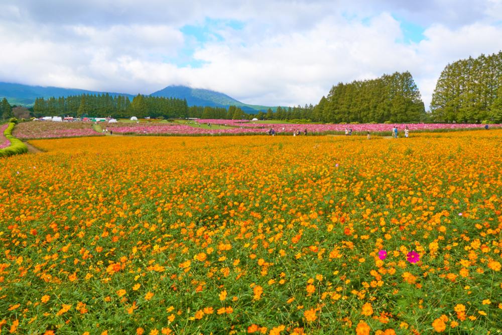 生駒高原 全景