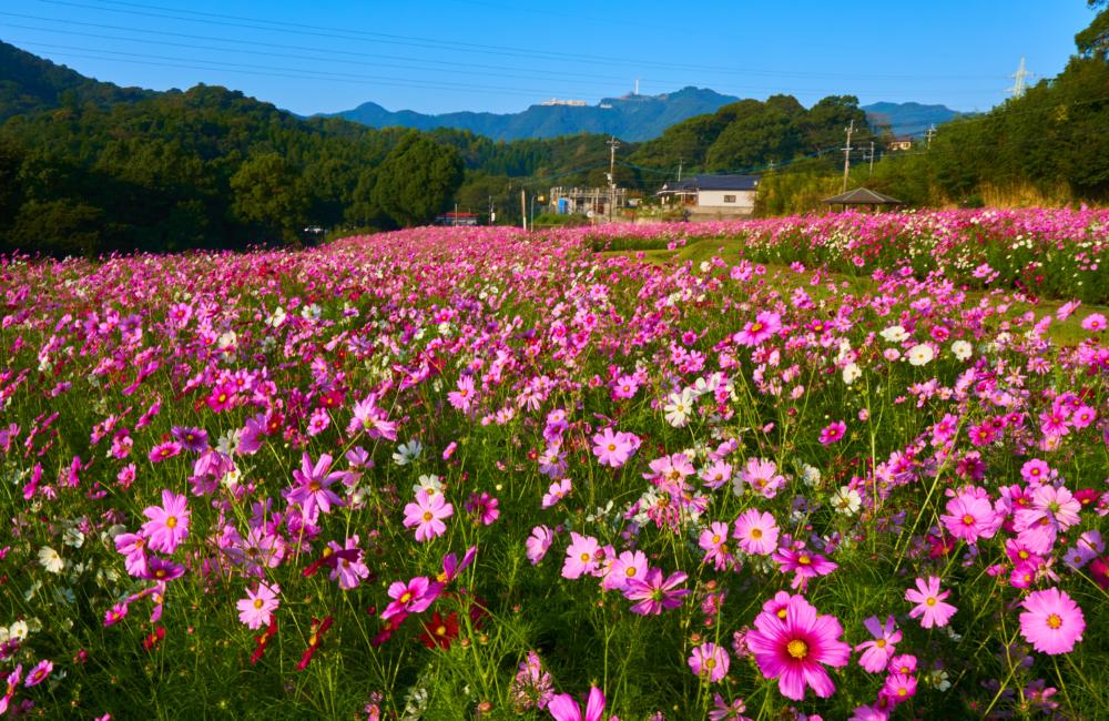 慈眼寺公園の全景