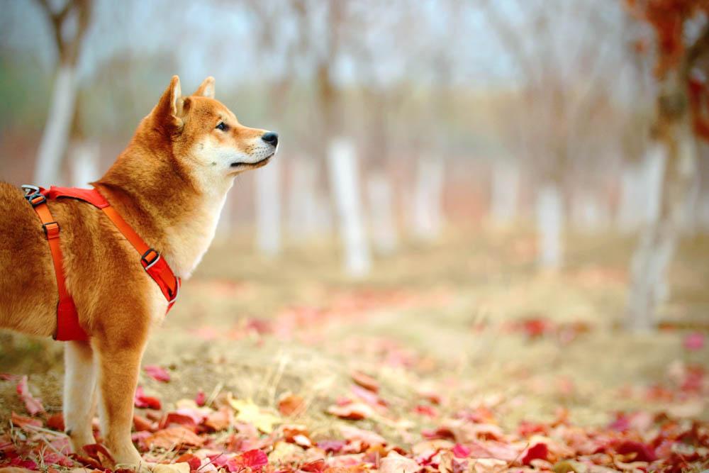 犬の散歩おすすめのライト
