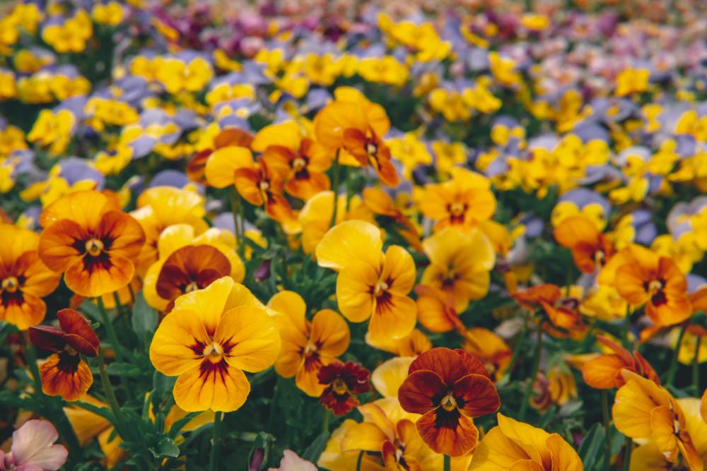 SIGMA 30mm F1.4で撮影した花