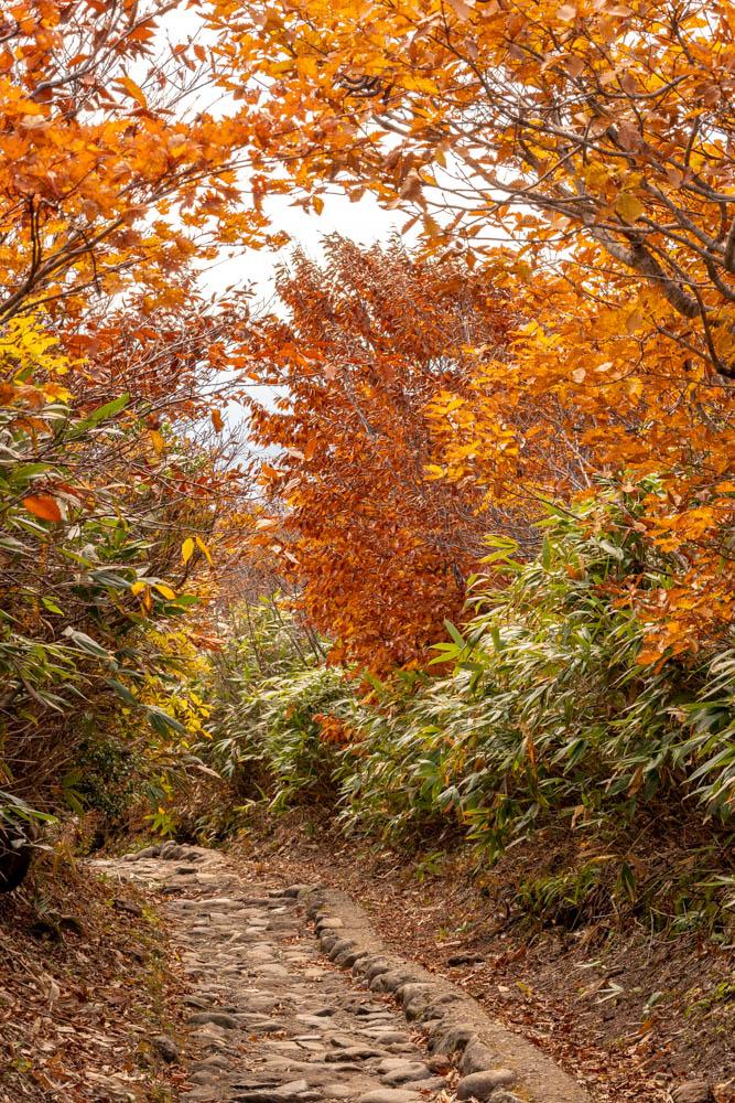 栗駒山 登山道