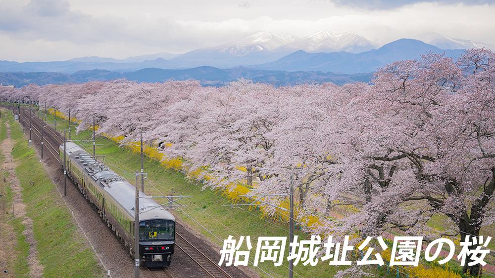 船岡城址公園の桜開花状況と見頃