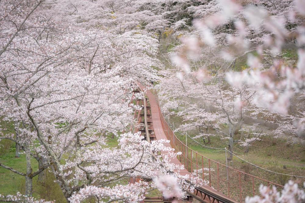船岡城址公園の桜と遊具