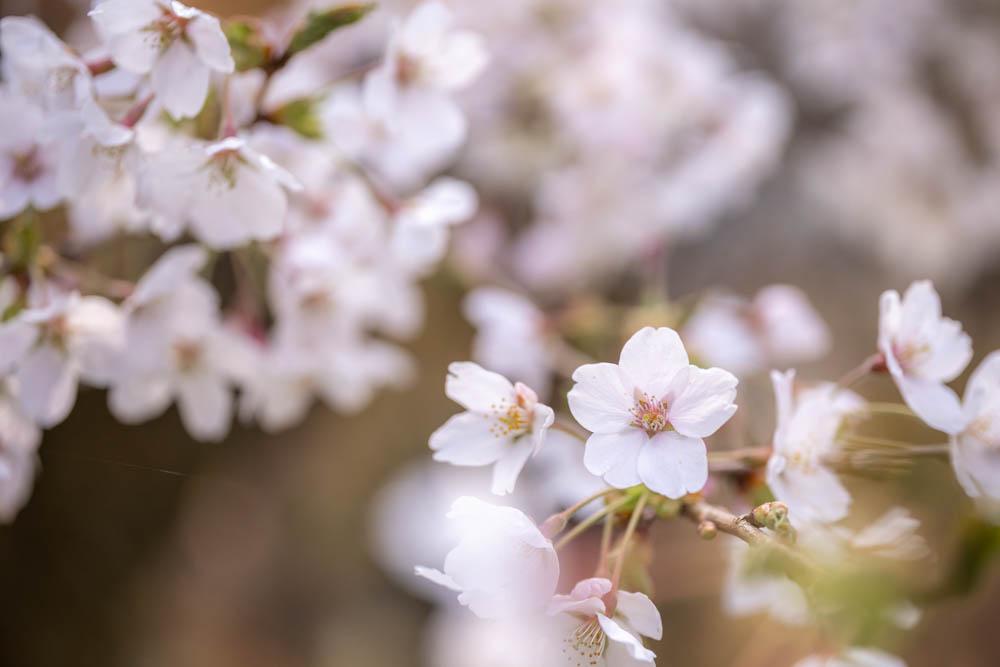 霞ヶ城公園の桜 撮影機材