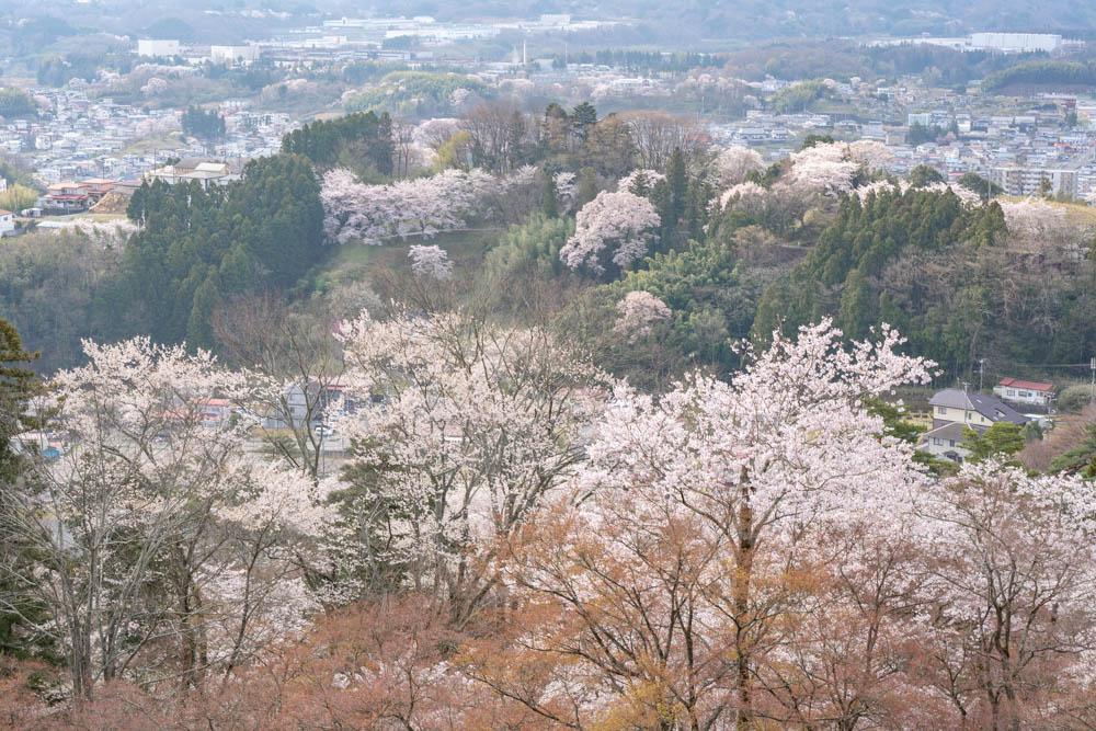 霞ヶ城公園の桜 評価