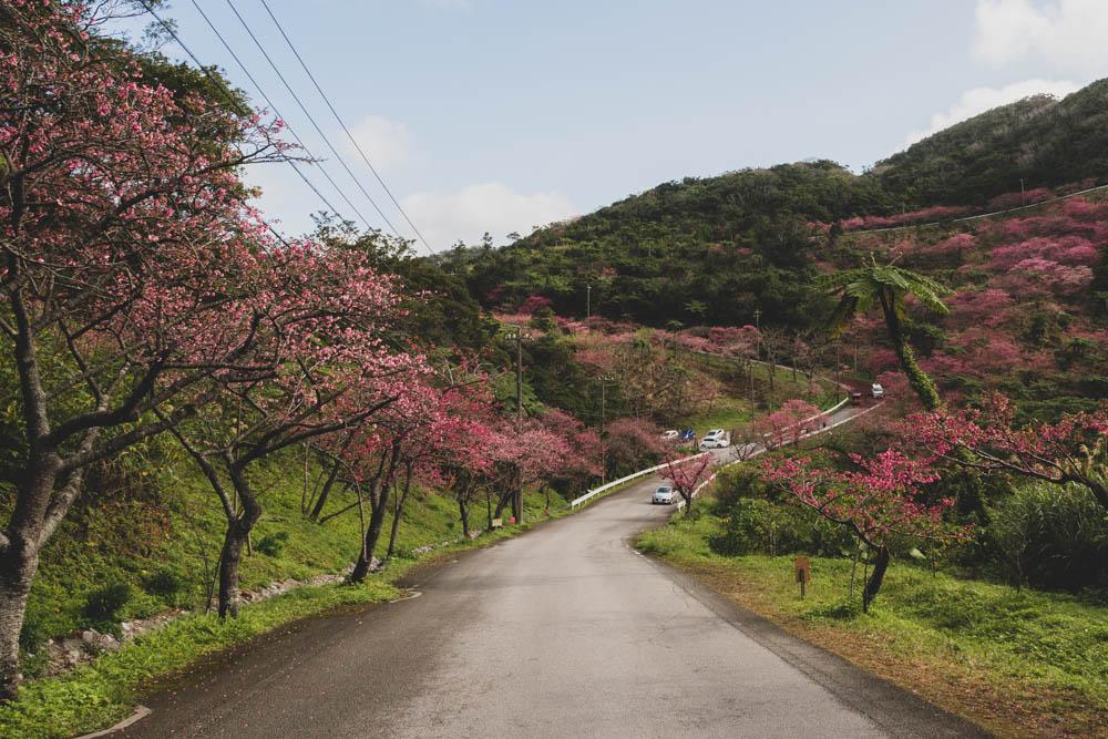 八重岳桜の森公園の評価