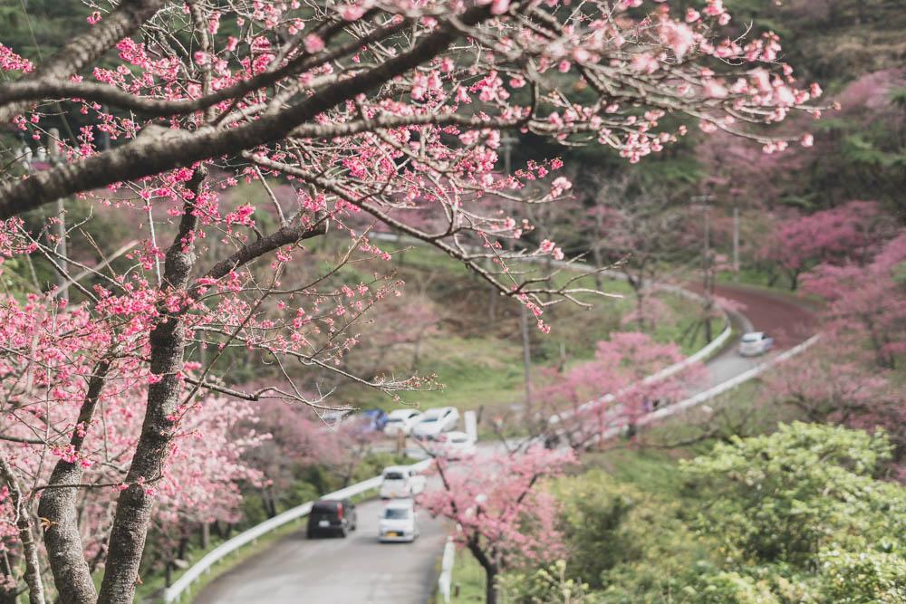 八重岳桜の森公園のお客