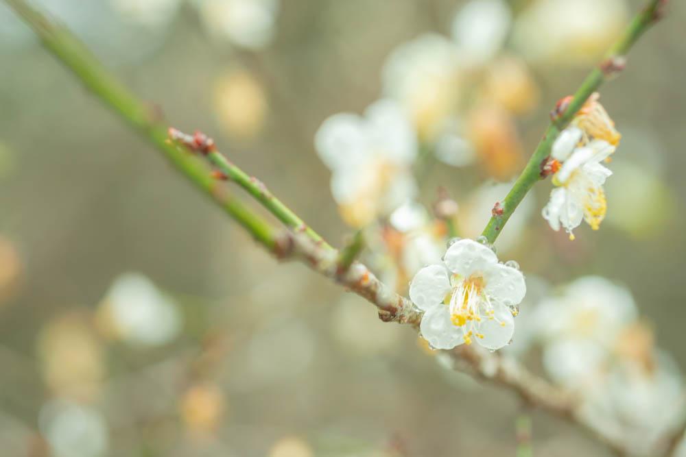 オーシッタイ梅並木の評価