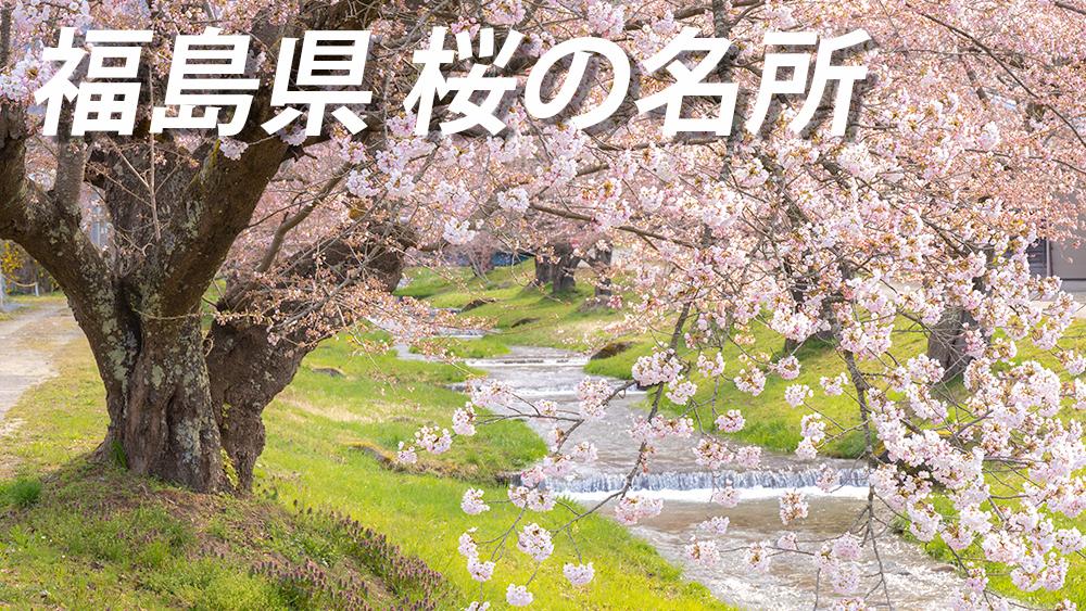 福島の桜名所 開花時期