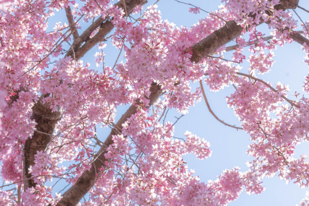 三春滝桜の撮影機材