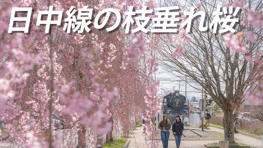 日中線の枝垂れ桜 喜多方市