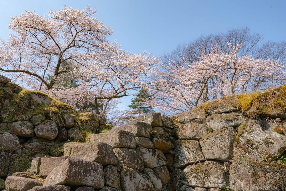 鶴ヶ城の桜 撮影機材