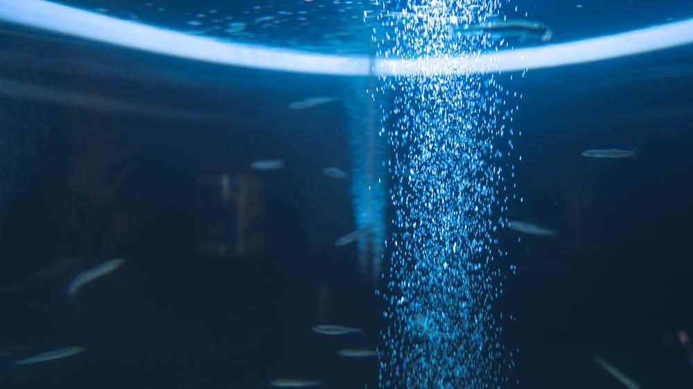 千歳水族館での撮影機材