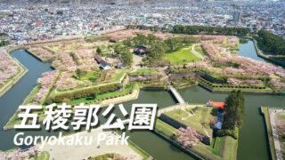 函館市五稜郭の桜満開時期は4月?