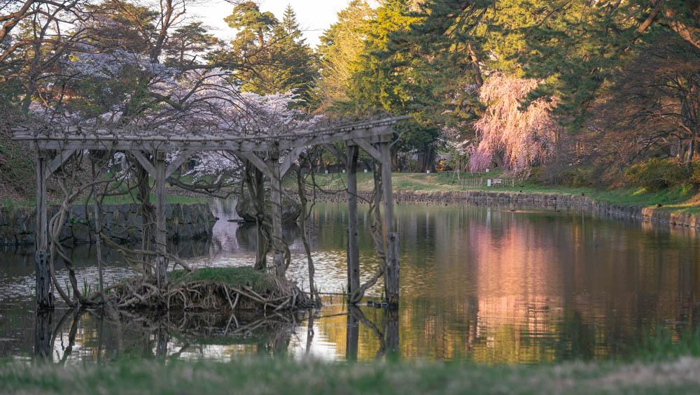弘前城公園の桜 撮影機材