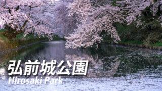 弘前城公園の桜祭り