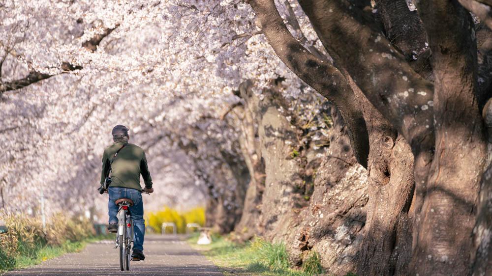 白石川一目千本桜の撮影方法