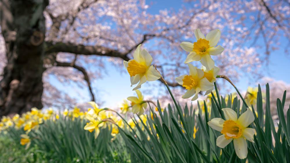 白石川一目千本桜の撮影機材