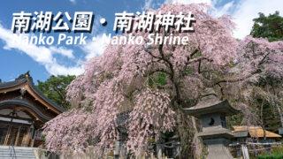 南湖公園の桜開花状況とアクセス