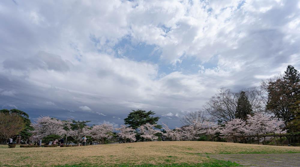 南湖公園の桜まとめ