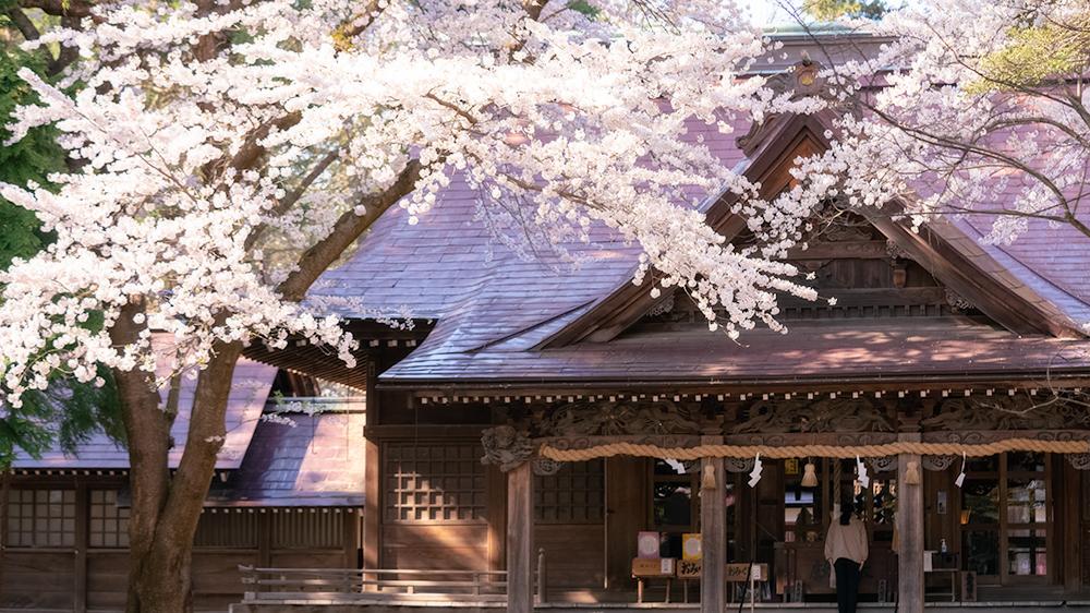猿賀公園の桜撮影のポイント