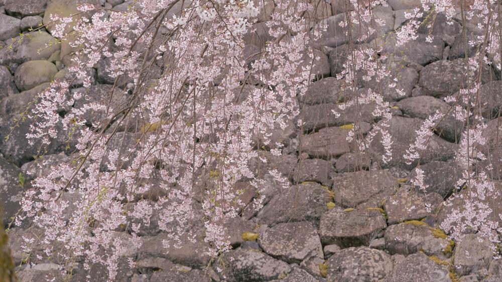 白石城の桜撮影のポイント