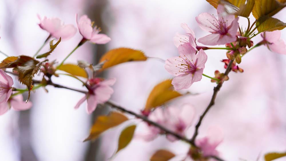 旭ヶ丘公園の桜と動物の動画