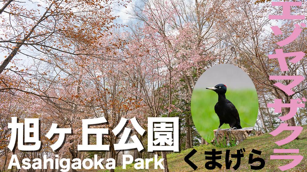 旭ヶ丘公園で満開の桜と動物達が癒し【北海道芦別市】