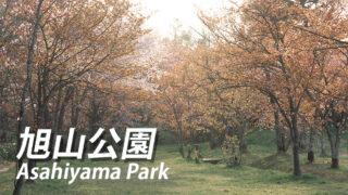 旭山公園の桜イベントやライトアップはある?【旭川市の桜名所】