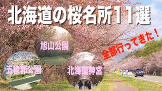 北海道の桜名所11選!見頃と写真、動画も載せます【全訪問済】