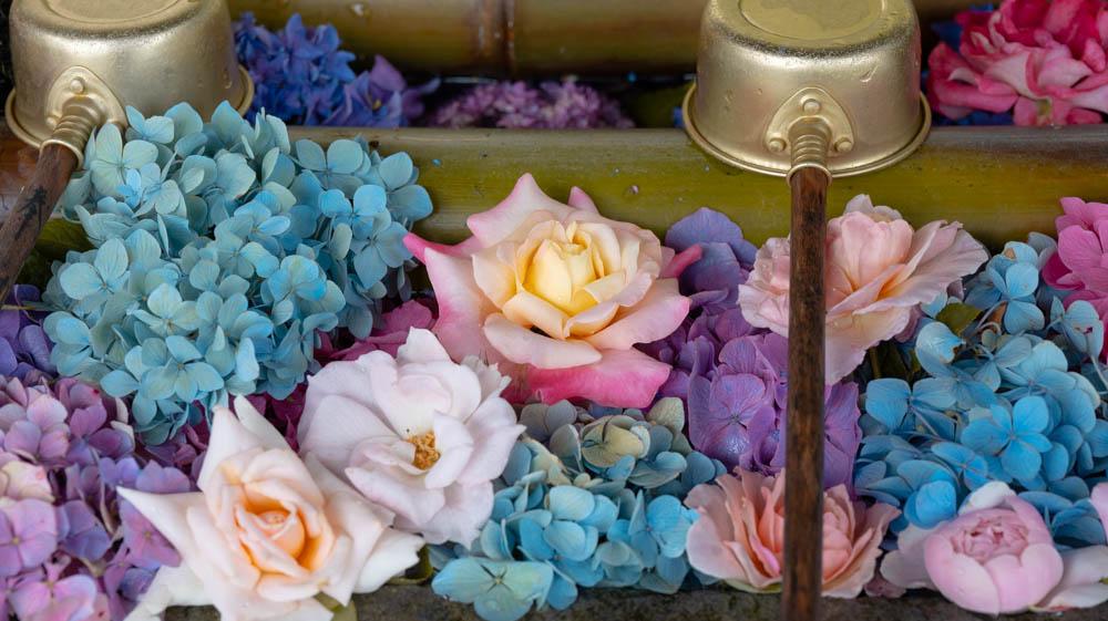 雨引観音の紫陽花写真を紹介