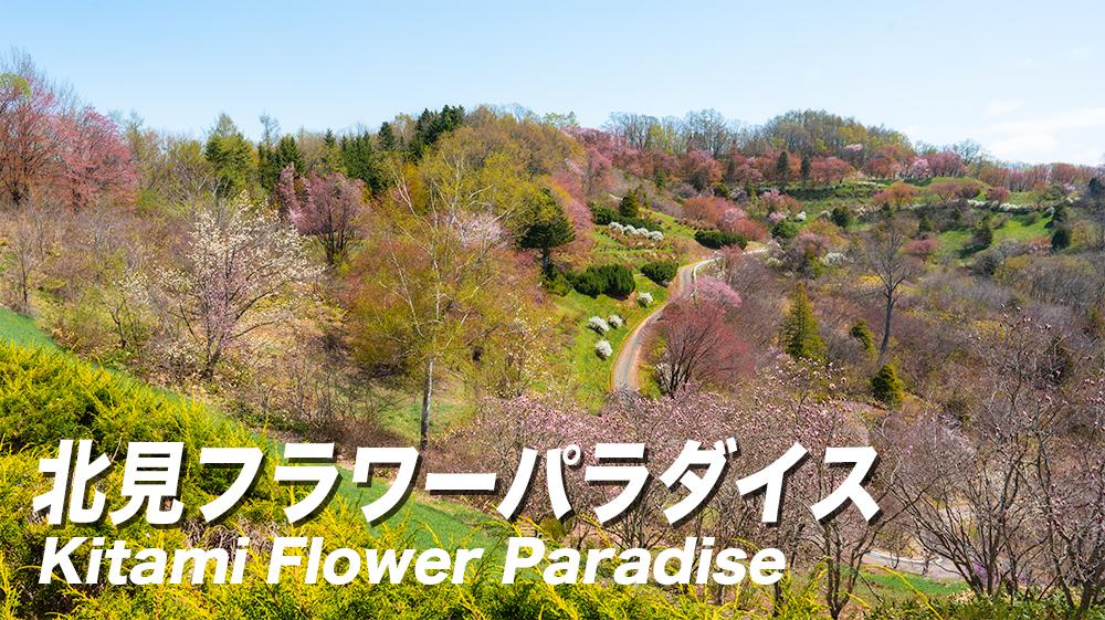 北見フラワーパラダイスの桜開花状況!【写真もあるよ】