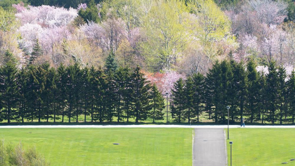 モエレ沼公園 桜撮影のポイント
