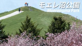 『モエレ沼公園』桜の森開花状況をお知らせ【札幌憩の桜スポット】