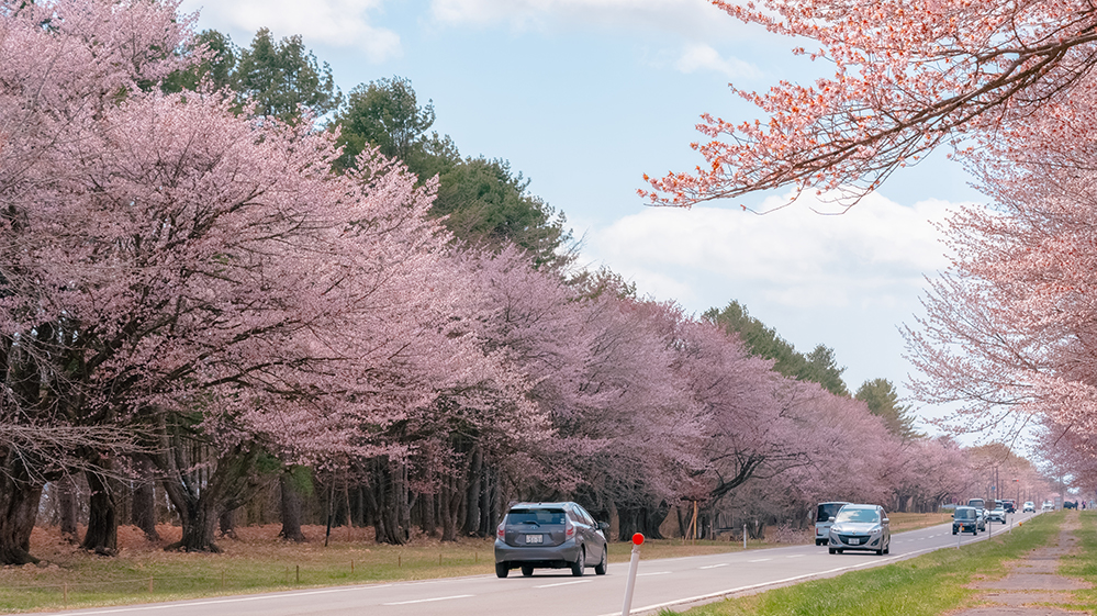 二十間道路桜並木のアクセス