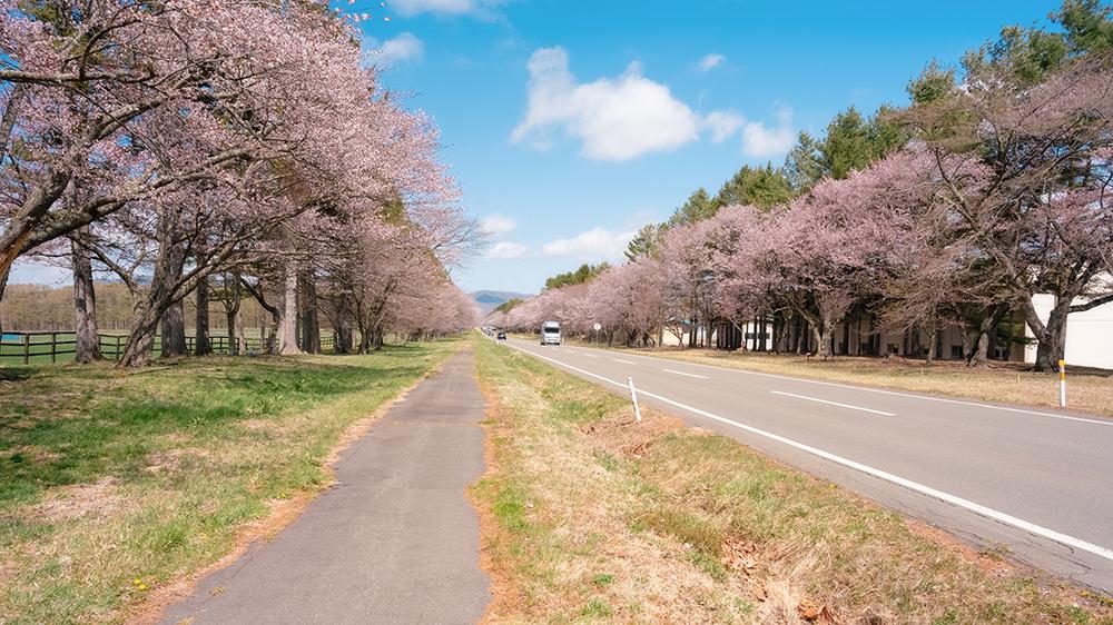 二十間道路桜並木での使用機材