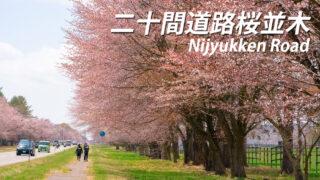 二十間道路桜並木が見頃!【アクセスとそもそも読み方は?】