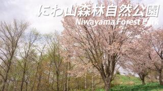 にわ山森林自然公園が桜満開!【北海道奈井江町の桜スポット】