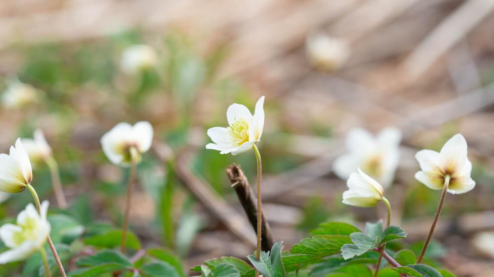 にわ山森林自然公園の桜撮影機材