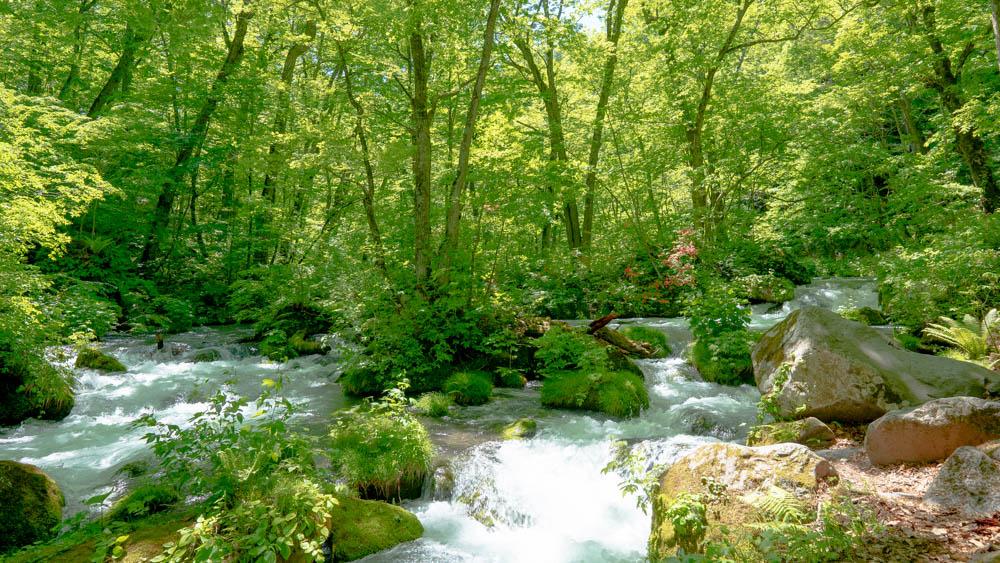 奥入瀬渓流撮影のポイント