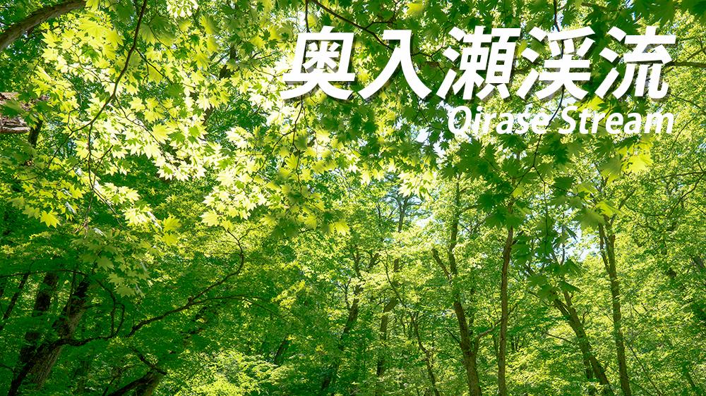 奥入瀬渓流の新緑!ベストシーズンはいつ?【新緑写真もあるよ】