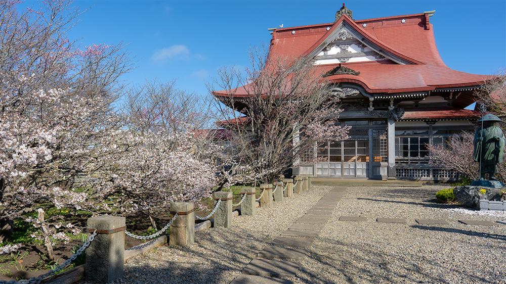 桜前線の終着点は根室市の清隆寺